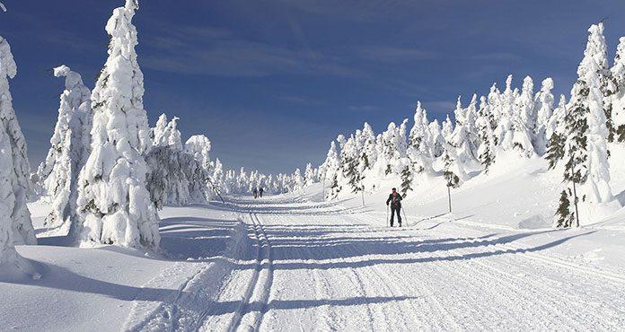 Wybieramy narty