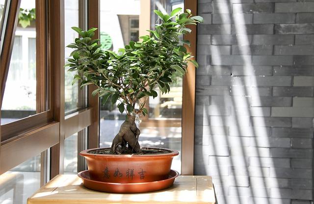 Najpiękniejsze drzewka bonsai